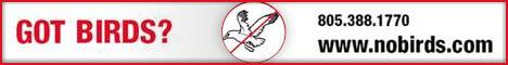 No Birds: Click Here
