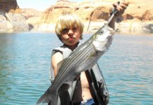 Anchovies is great Striper bait