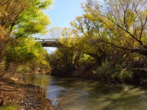 Gila River - Photo Courtesy Of Margie Anderson
