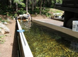 AZGFD Conducting Major Renovation At Sterling Springs Hatchery