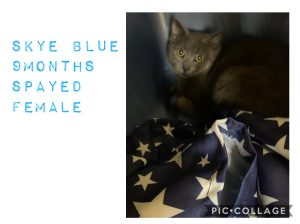 VFW-3513-Rescue-5-Skye-Blue