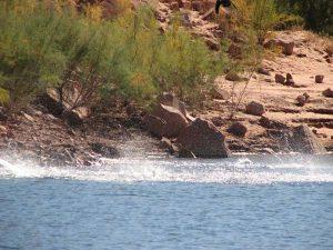 Lake Powell Report July 22, 2020