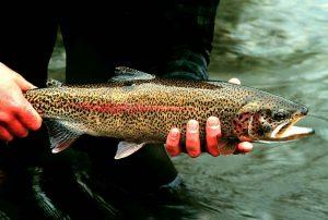 Arizona Fishing Regulation Ammendments