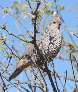 November 2020 Arizona Hunting Calendar