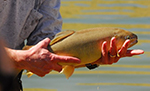 Arizona Fish Stocking June 2021